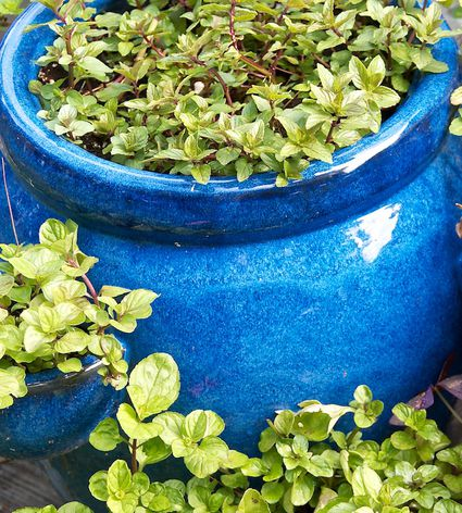 Planting Vegetables In Containers Container vegetable gardening growing a mint container garden container vegetables workwithnaturefo