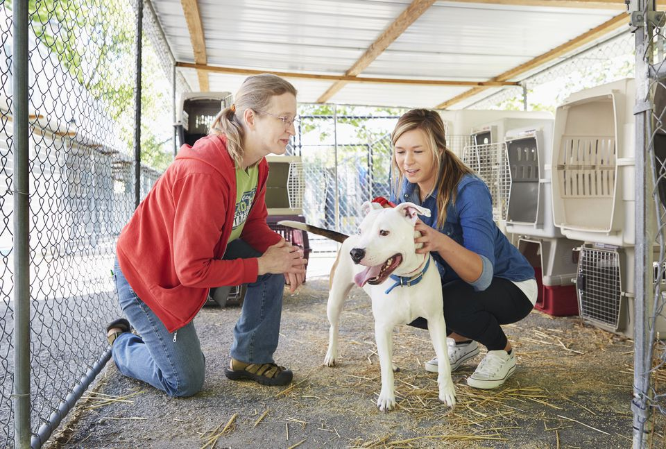 volunteering and other ways to help animals in need