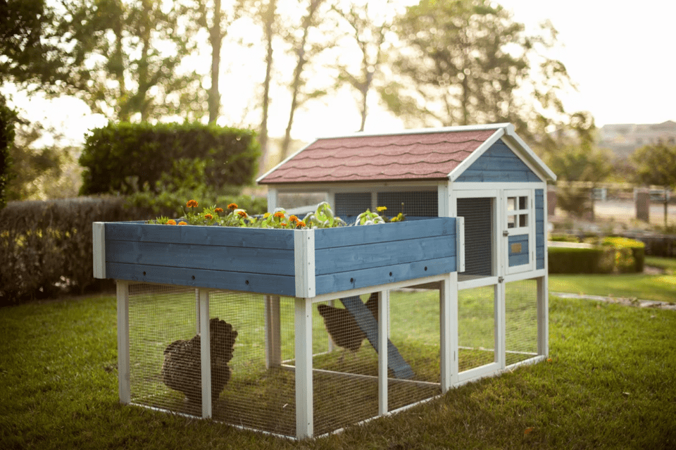 The 7 Best Chicken Coops to Buy in 2018