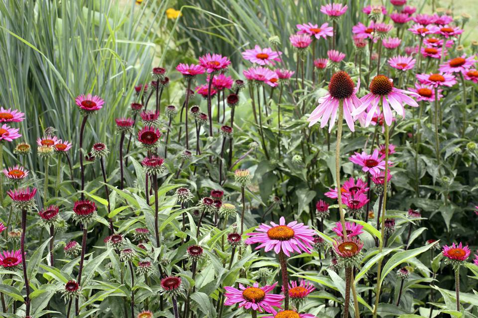 A closeup of a Perennial Border