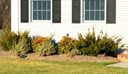 Photo showing how shrubs can hide pipes on house walls.
