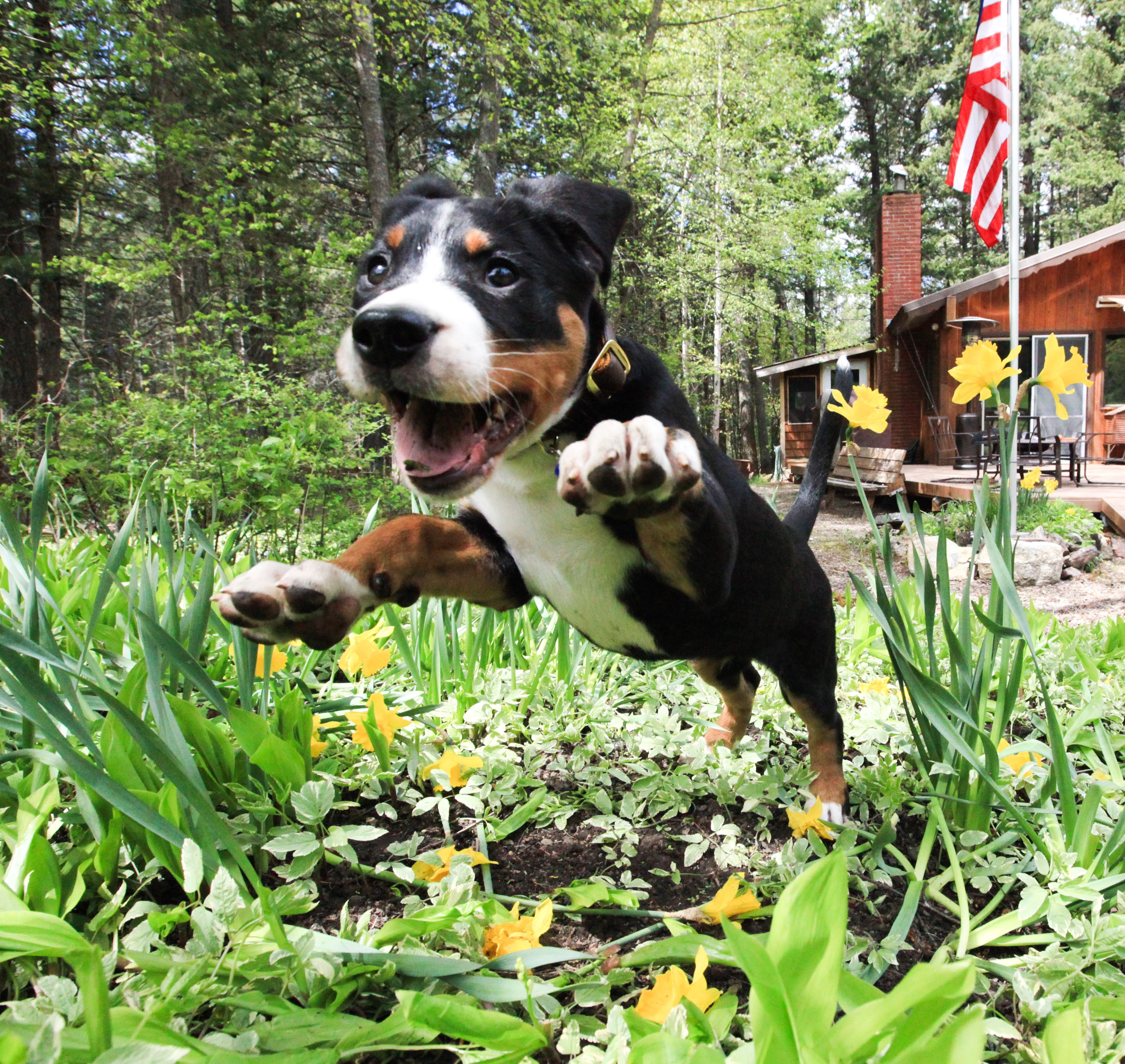 8 Backyard Ideas To Delight Your Dog: Keep Dogs Out Of Flower Gardens