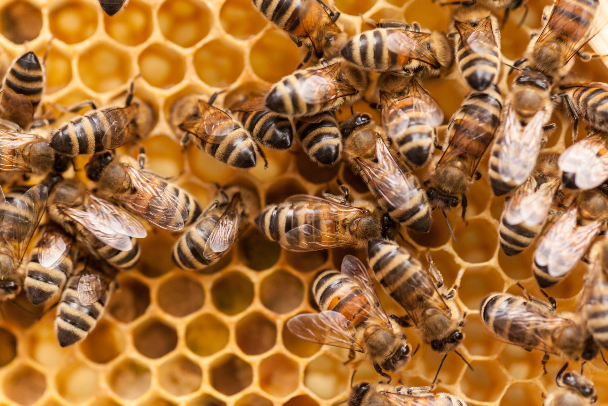 10 fascinating facts about honey bees