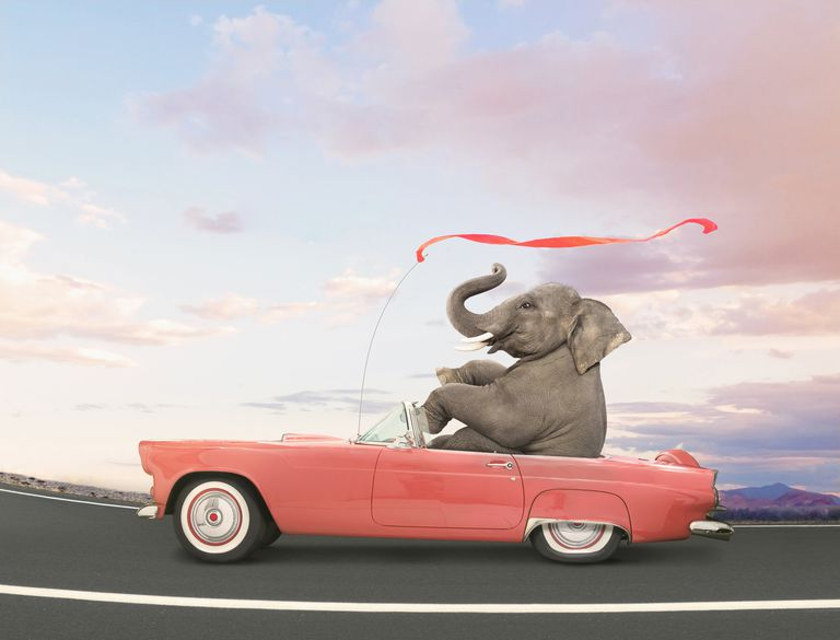 Elephant Auto Insurance Quote Magnificent Elephant Auto Insurance Review