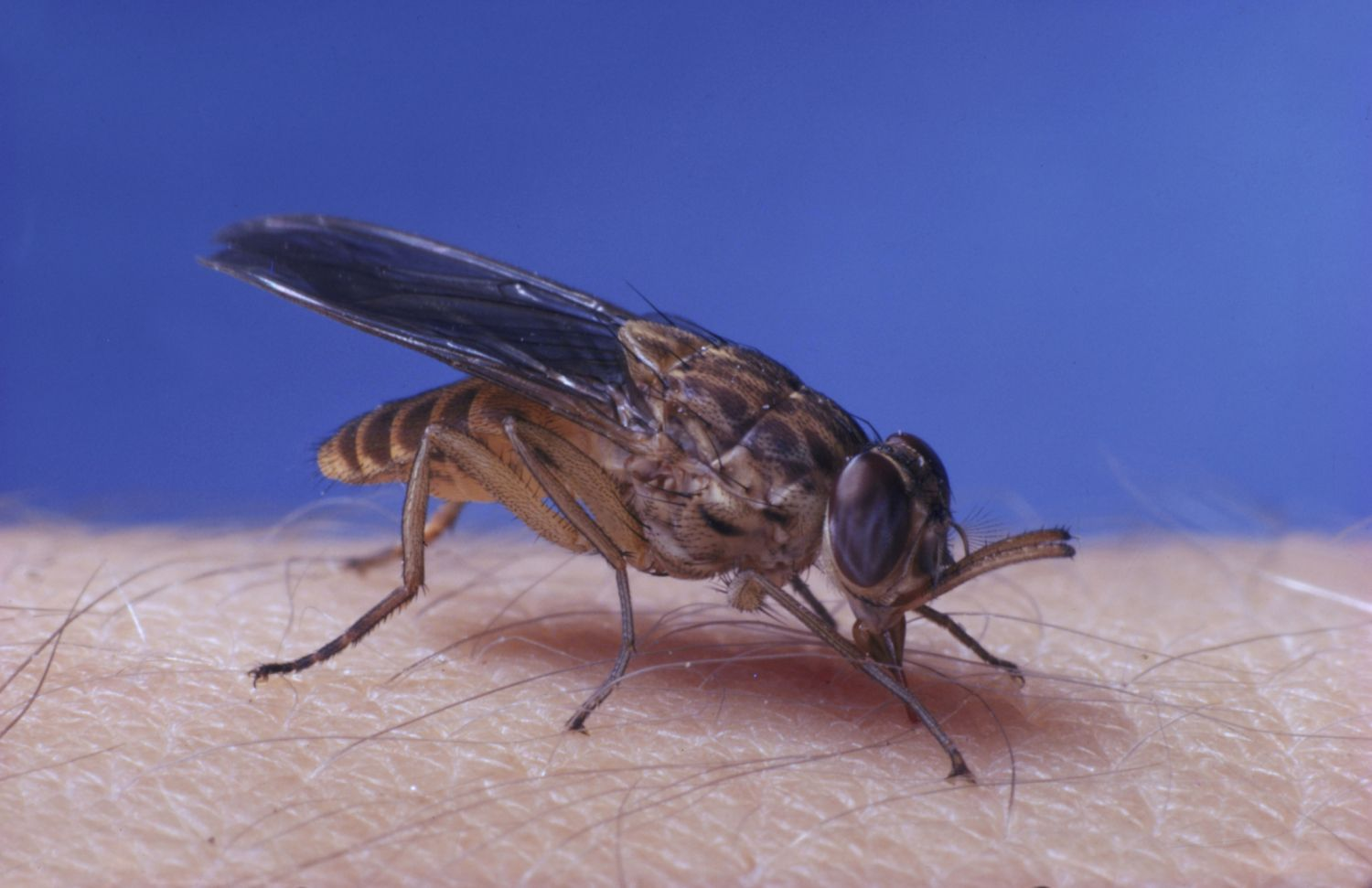 . Top 7 Bugs That Feed on Humans