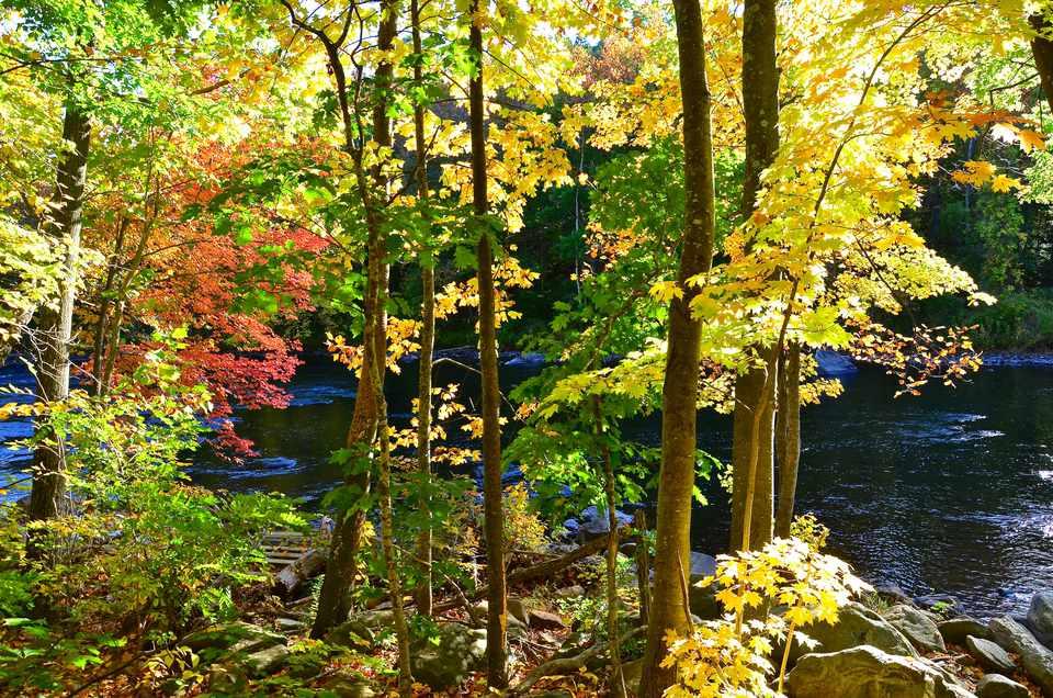 Farmington River Fall Foliage