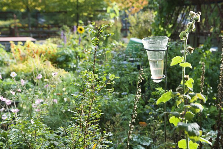 A half-full rain gauge in a garden