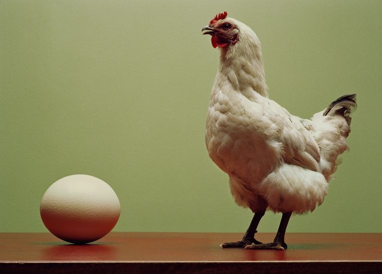Chicken standing on table by large egg (Digital Enhancement)