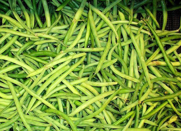Ejotes-vainicas-frijoles-verdes