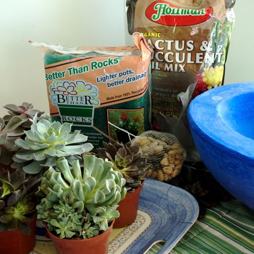 Making a simple succulent container garden container gardening picture of what you need for your succulent container garden workwithnaturefo