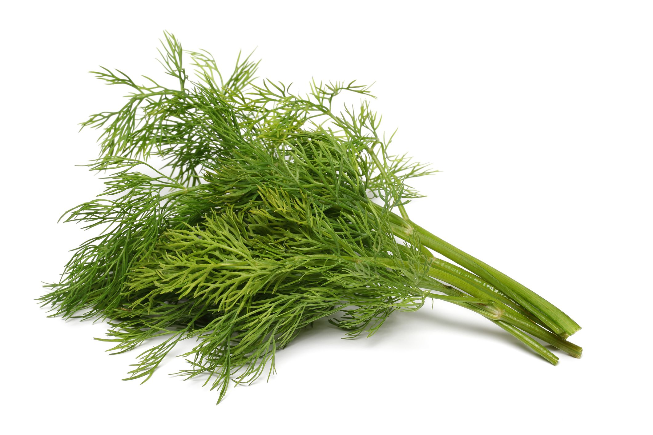 How To Store Dill Weed And Seeds