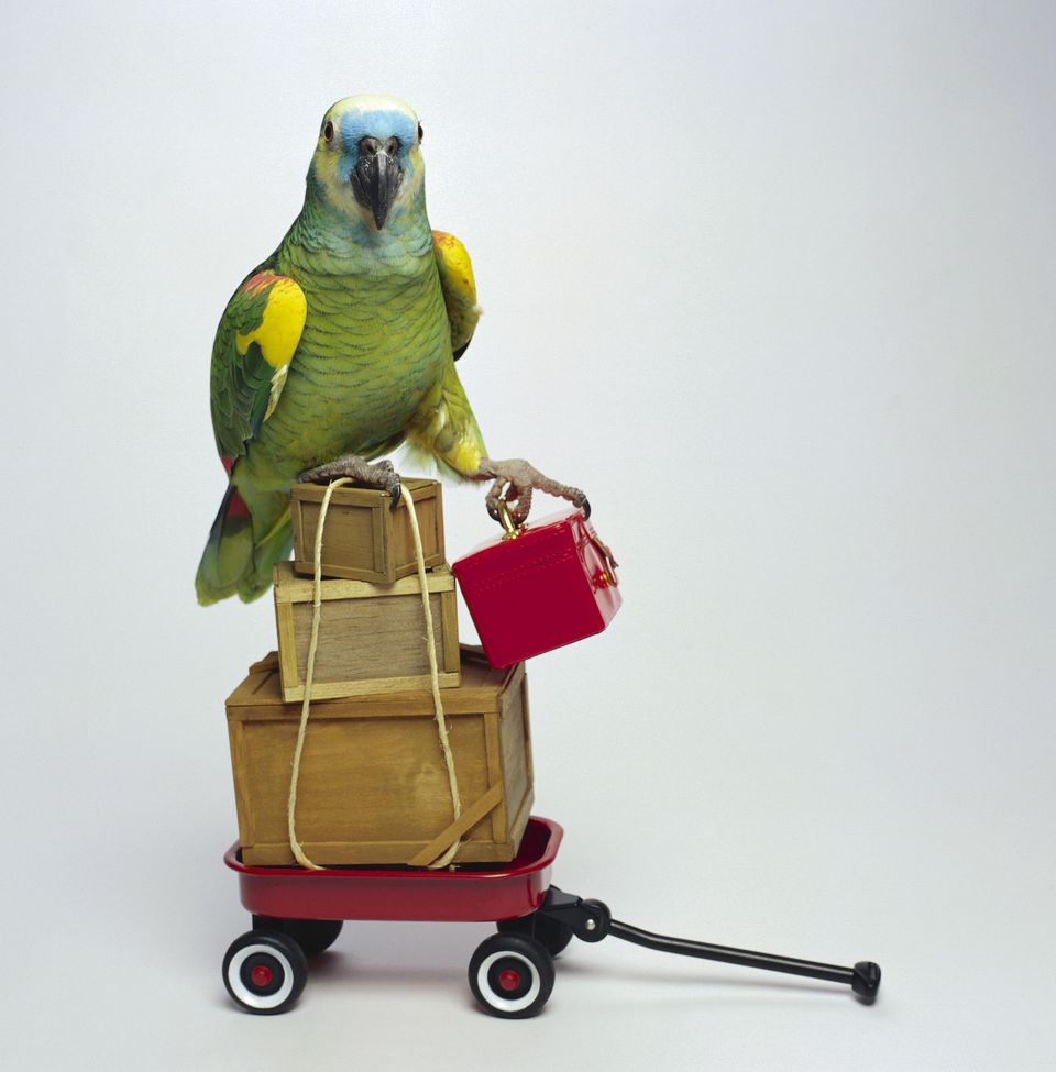 Parrot and Luggage