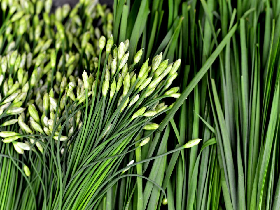 Garlic Chives or Chinese Chives