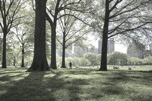 great lawn in central park