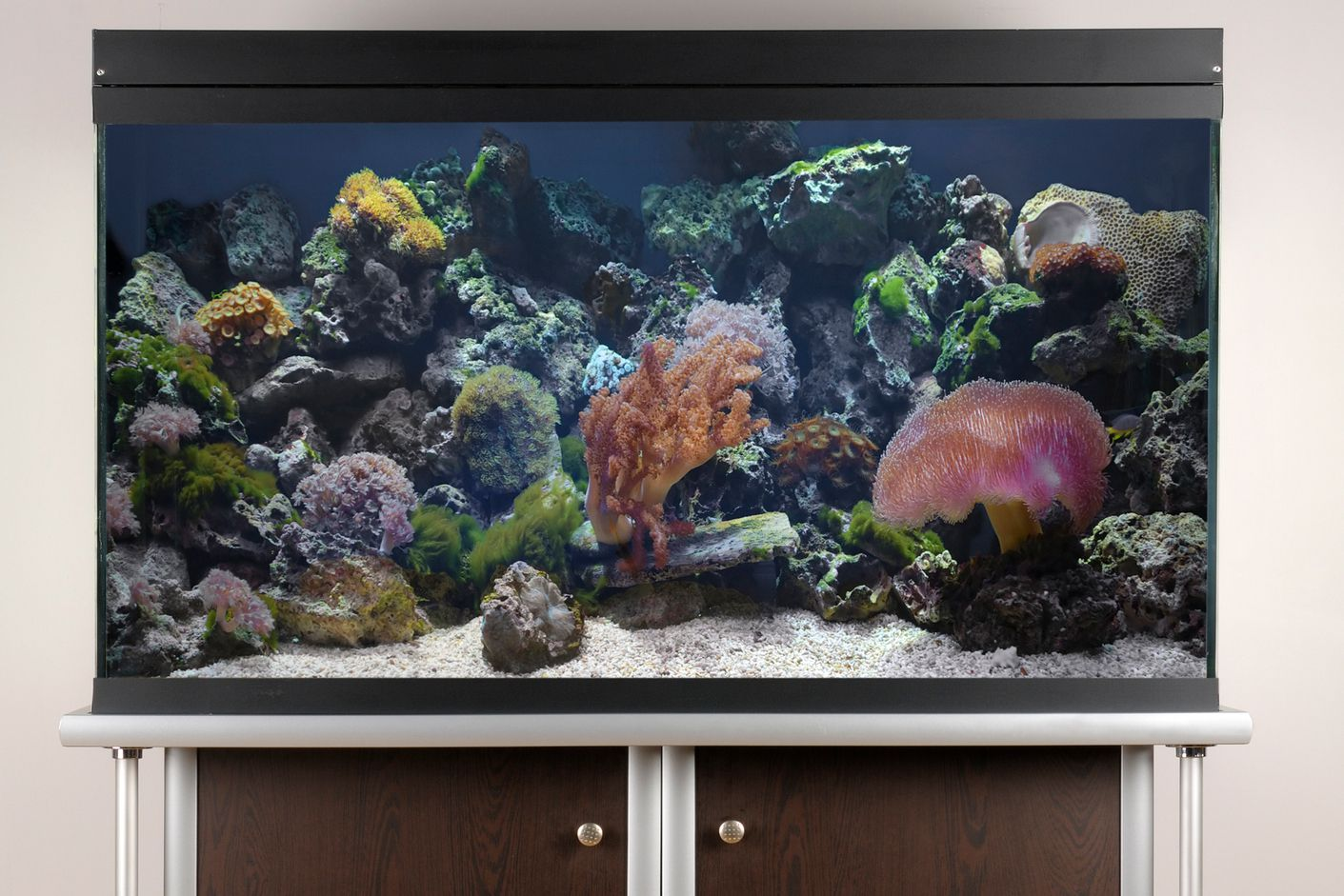 10 Easy Saltwater Aquarium Set Up Steps