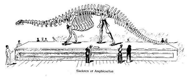 amphicoelias