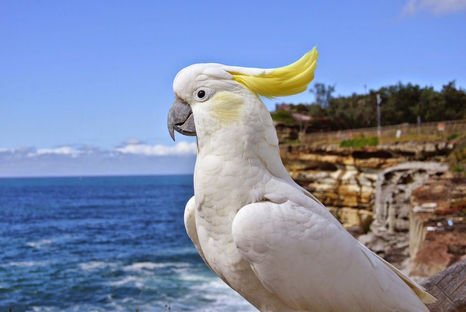 Close-Up Of Sulphur-Crested Cockatoo By Sea Against Sky