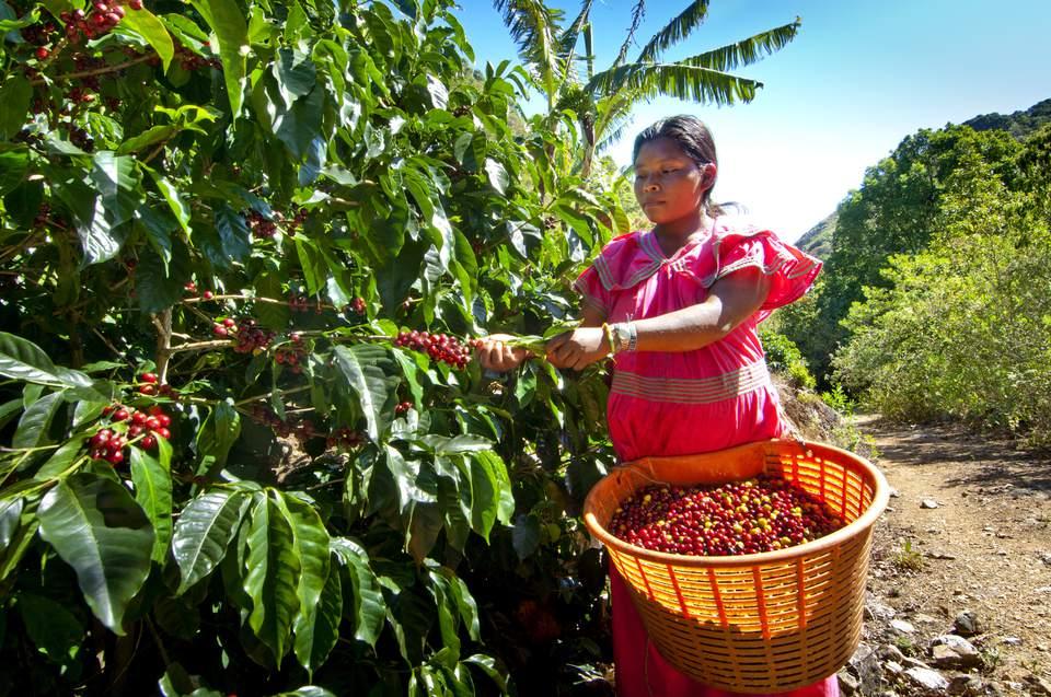A coffee farm in San Marcos de Tarrazu.
