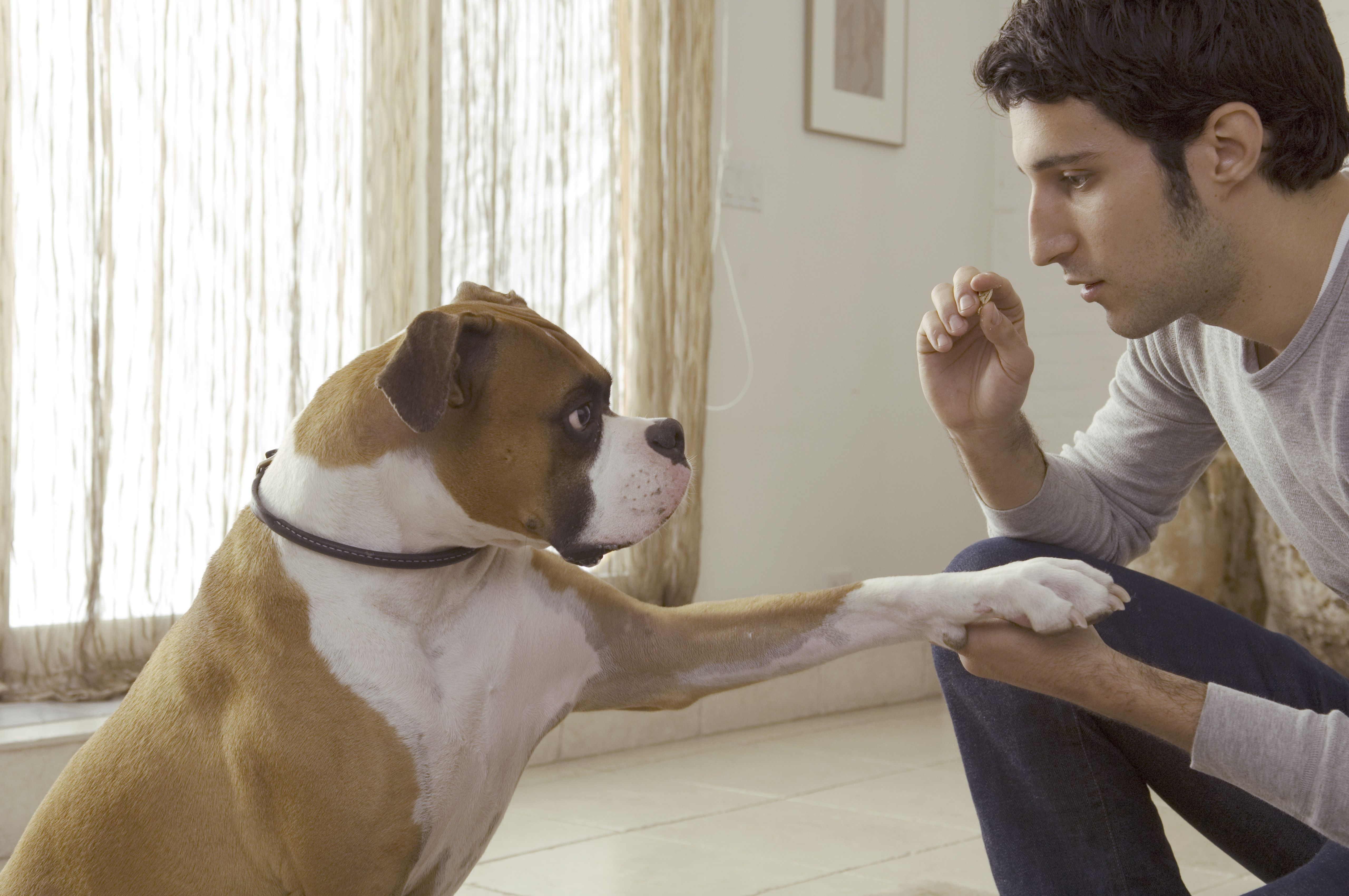 Defining vet tech credentials the meaning of rvt lvt and cvt dog trainers and behaviorists are not the same xflitez Images