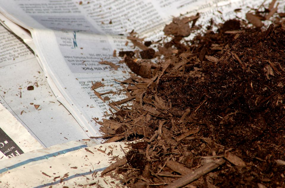 Newspaper (image) can smother your grass. Apply mulch to weigh it down.
