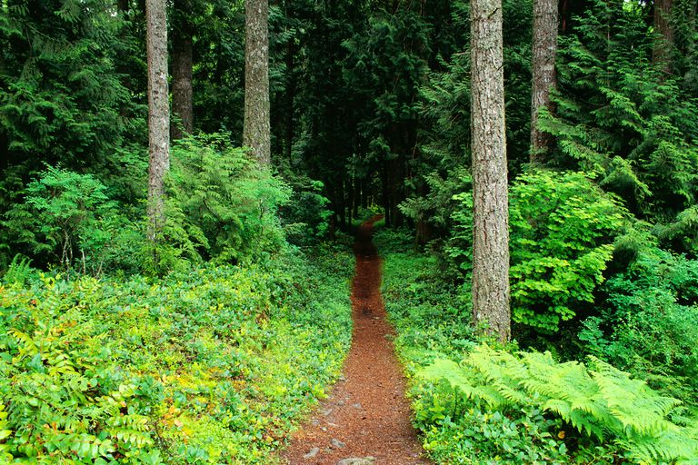 ForestPath_1500.jpg