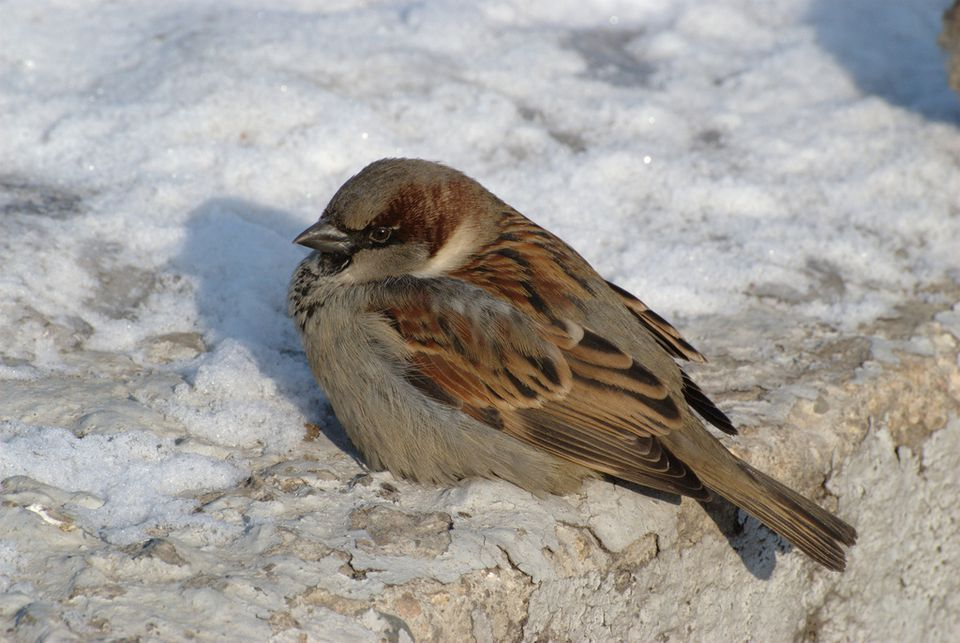 bird sunning to keep warm in winter