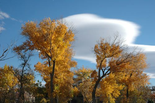Fall cottonwood trees along the Truckee River in downtown Reno, Nevada