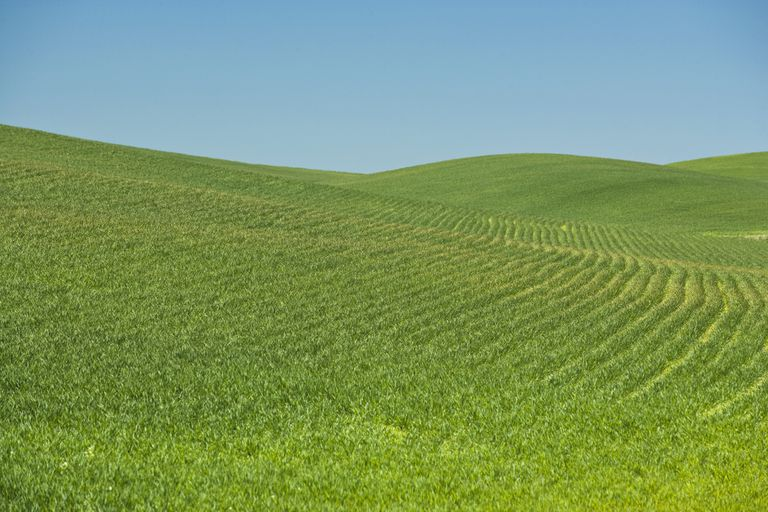 Monoculture Wheat Field, Spokane County, Washington USA