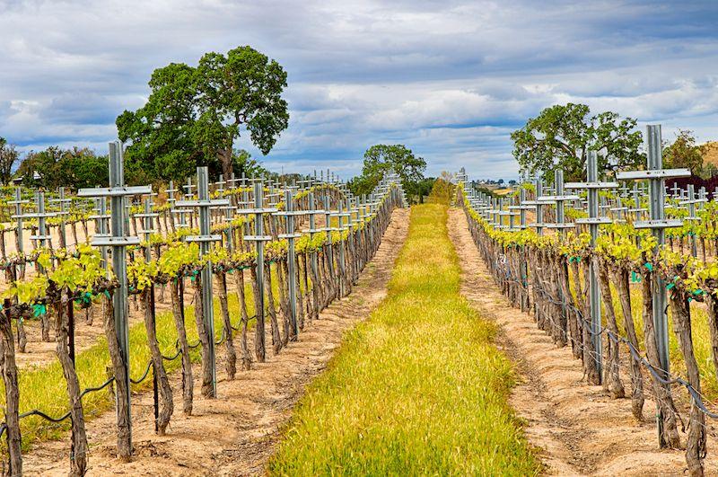 Posa Robles vineyard