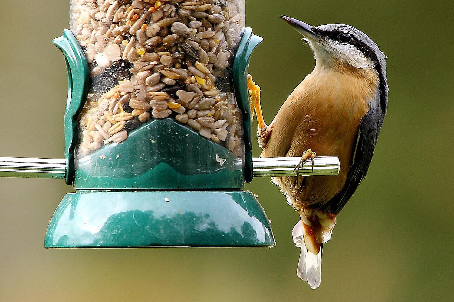 choose the best birdseed for your backyard birds