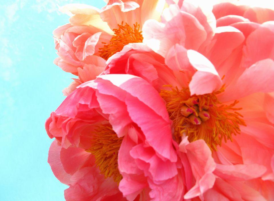 feng shui of flower symbols