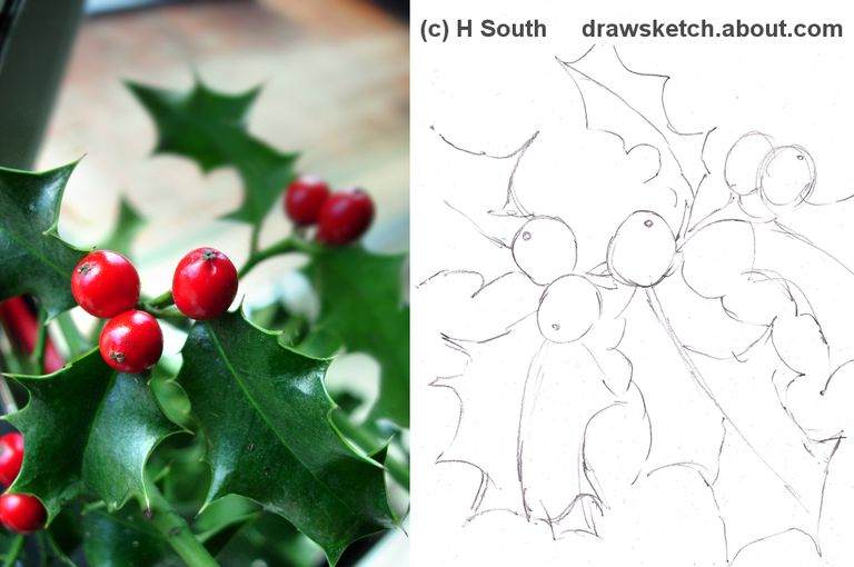 How to Draw Holly with Watercolour Pencil