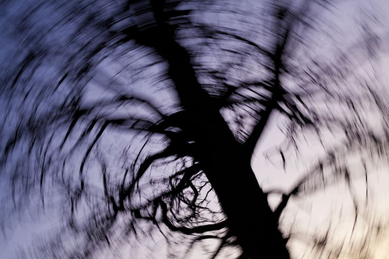 Blurry picture of a large tree at dusk