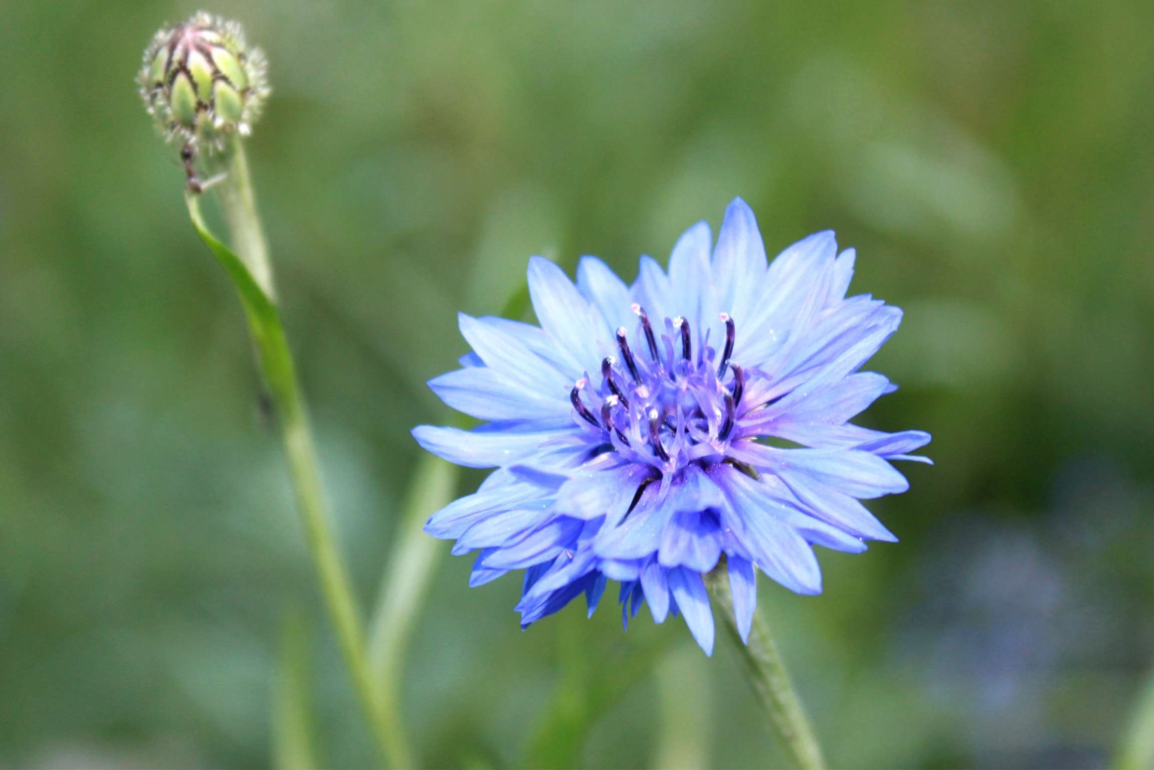 How to Make Natural Blue Dye From Plants