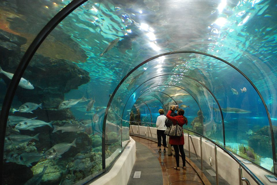 Dallas Aquarium