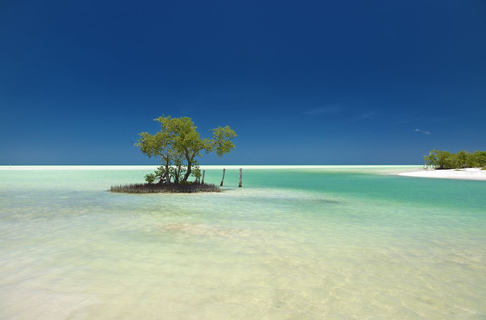 A lonely mangrove on Isla Holbox