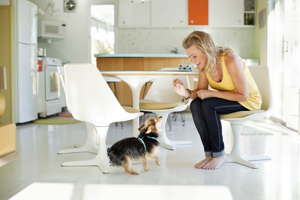 training dog treat in dining room