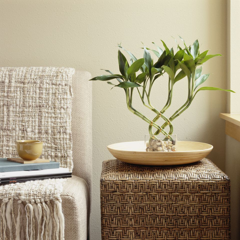Bamboo plant on side table by sofa