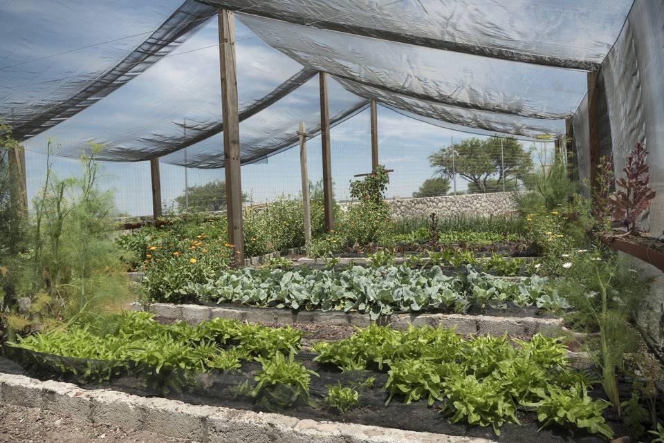 Net Shade greenhouse