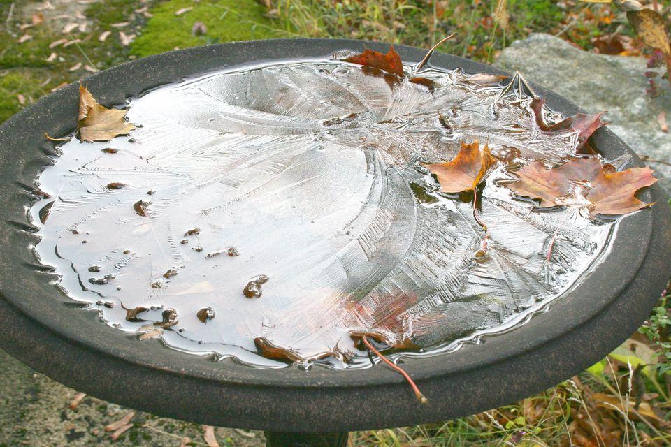 Frozen Bird Bath