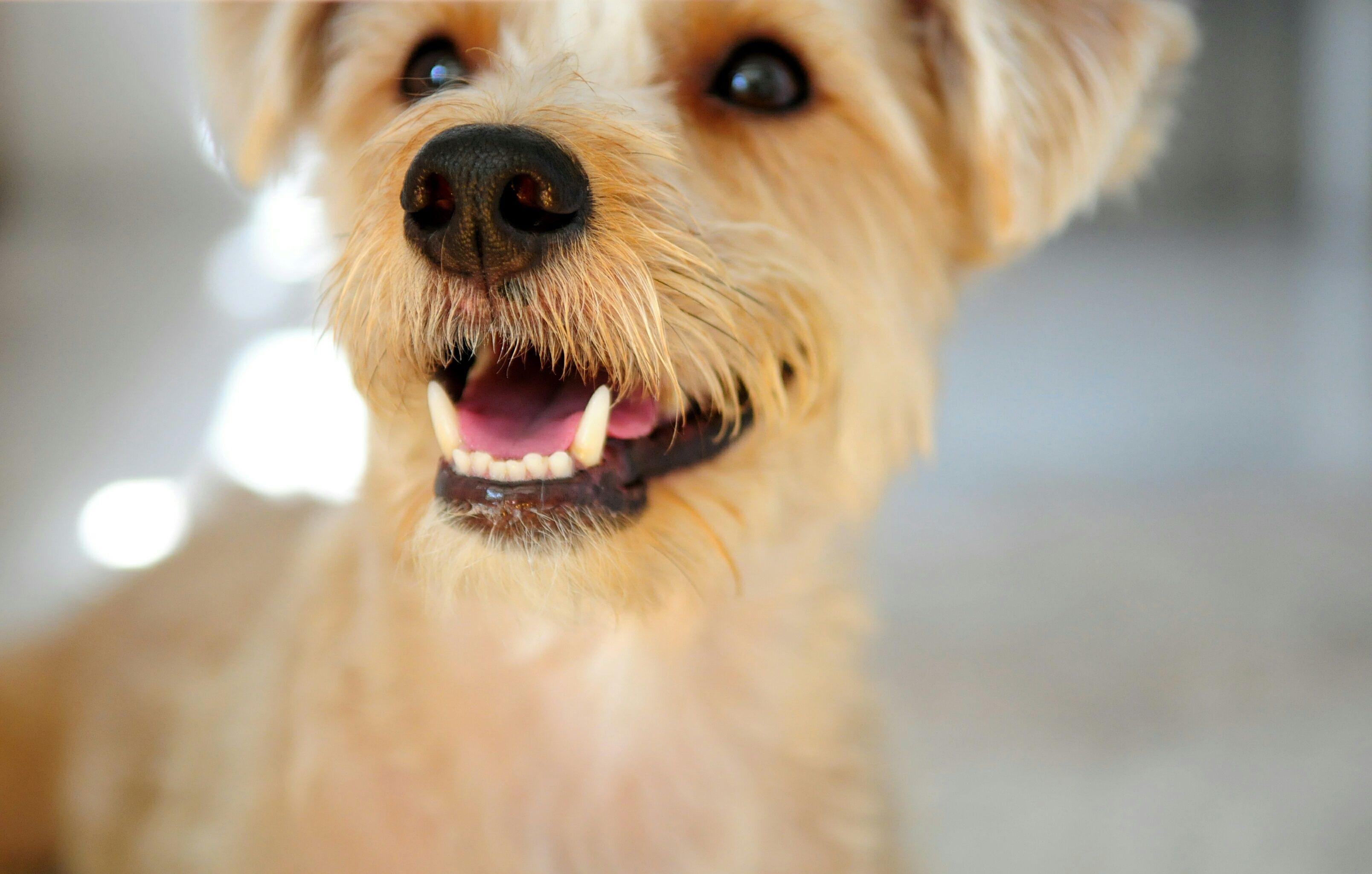 teeth of an adult dog