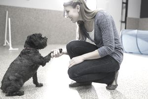 Dog trainer shaking hands with dog