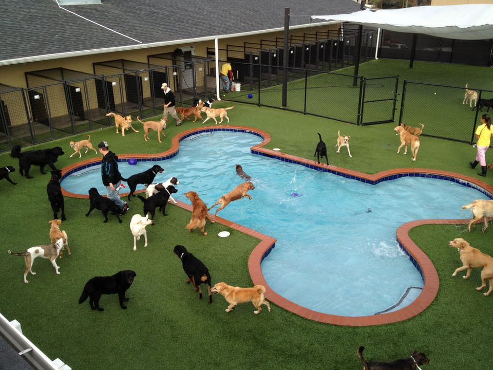 Dogs in a bone-shaped pool