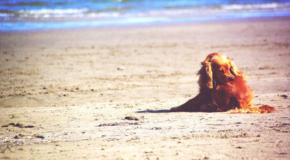 Dog itching while sitting on sand