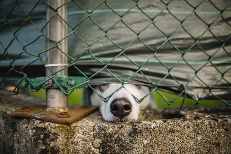 Dog at the other side of fence