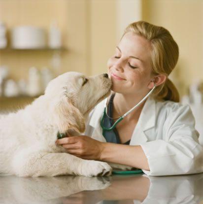 veterinarian.jpg