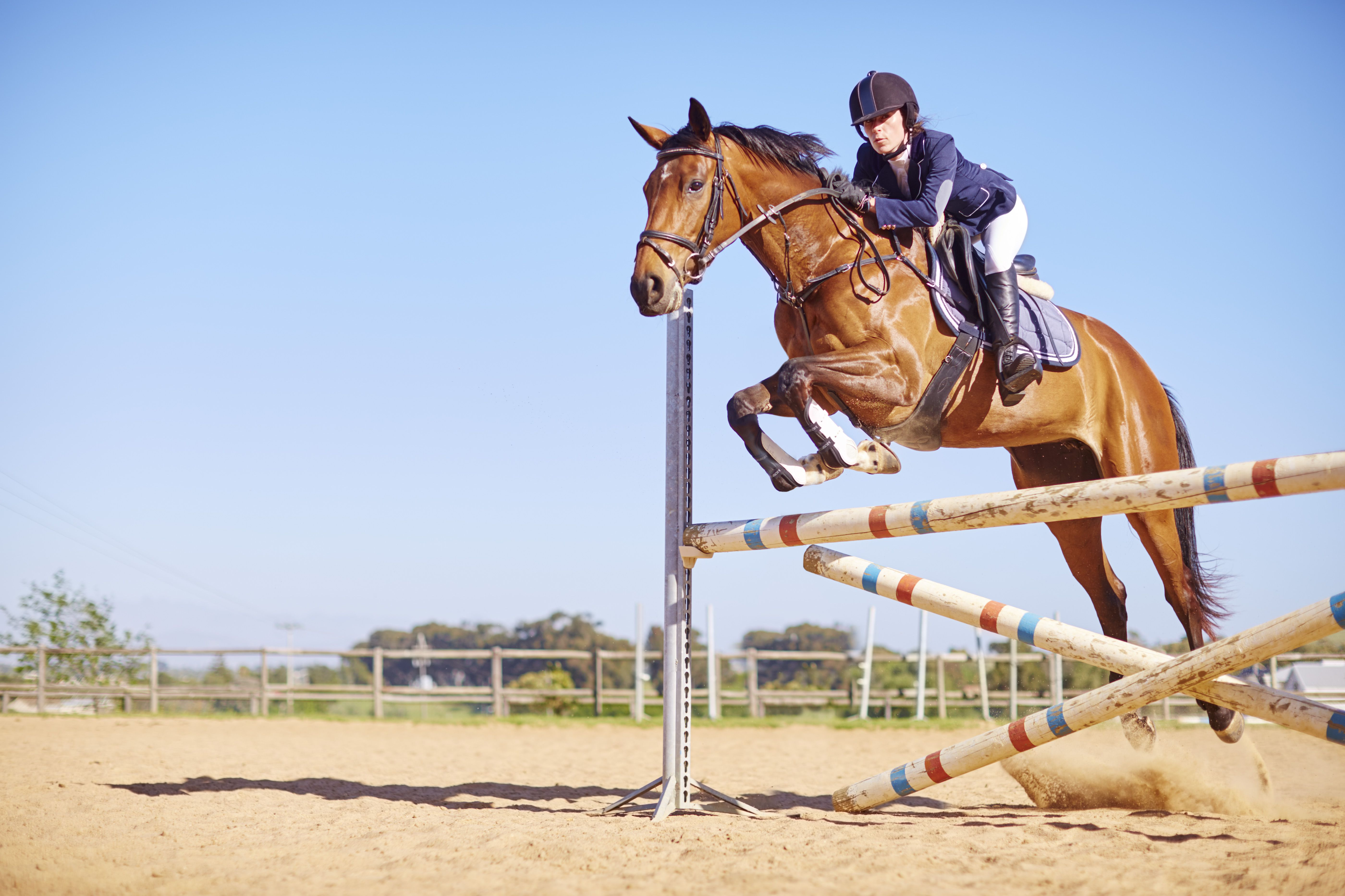 introduction to jumping in horseback riding. Black Bedroom Furniture Sets. Home Design Ideas