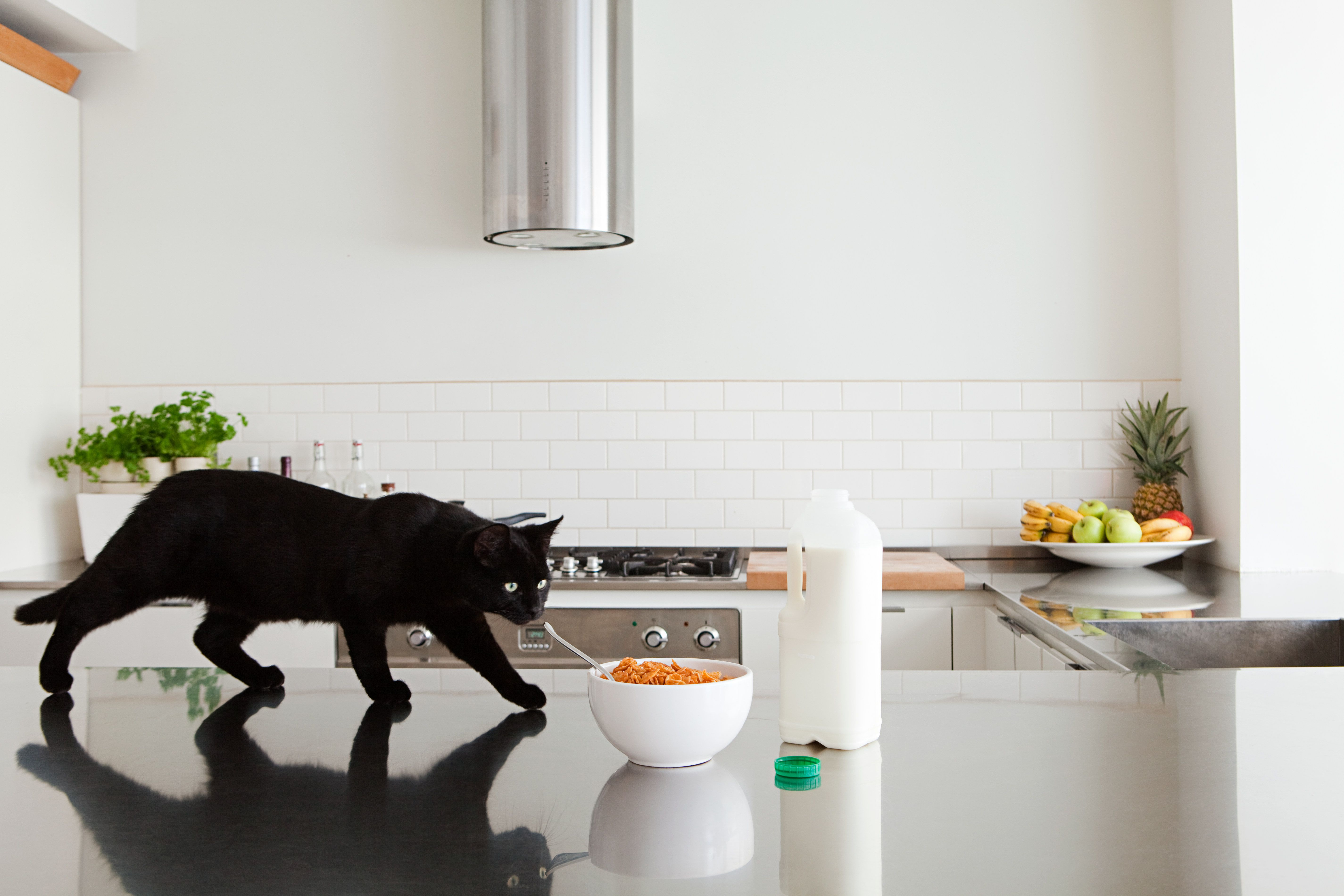 How To Keep Cats Off Your Kitchen Counters