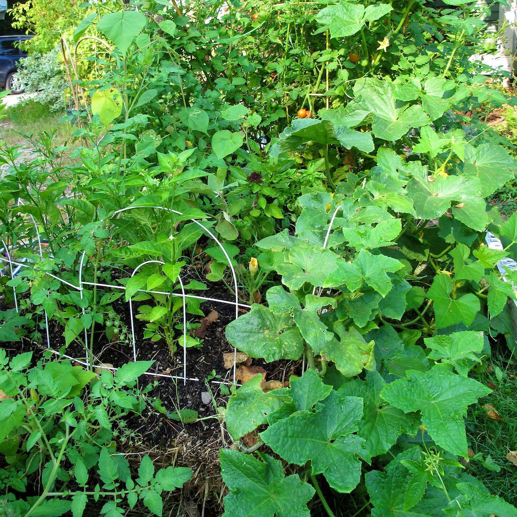 30 Amazing Ideas For Growing A Vegetable Garden In Your: How To Start A Straw Bale Garden