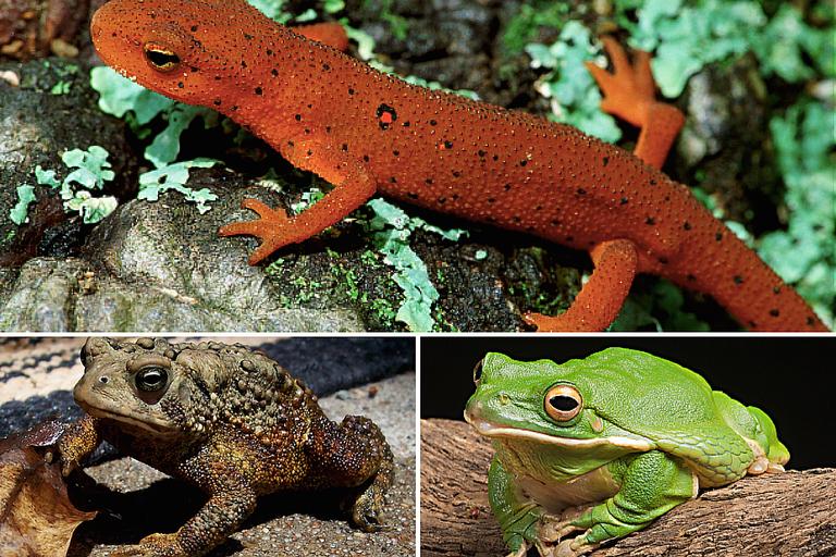 Photos of Amphibians